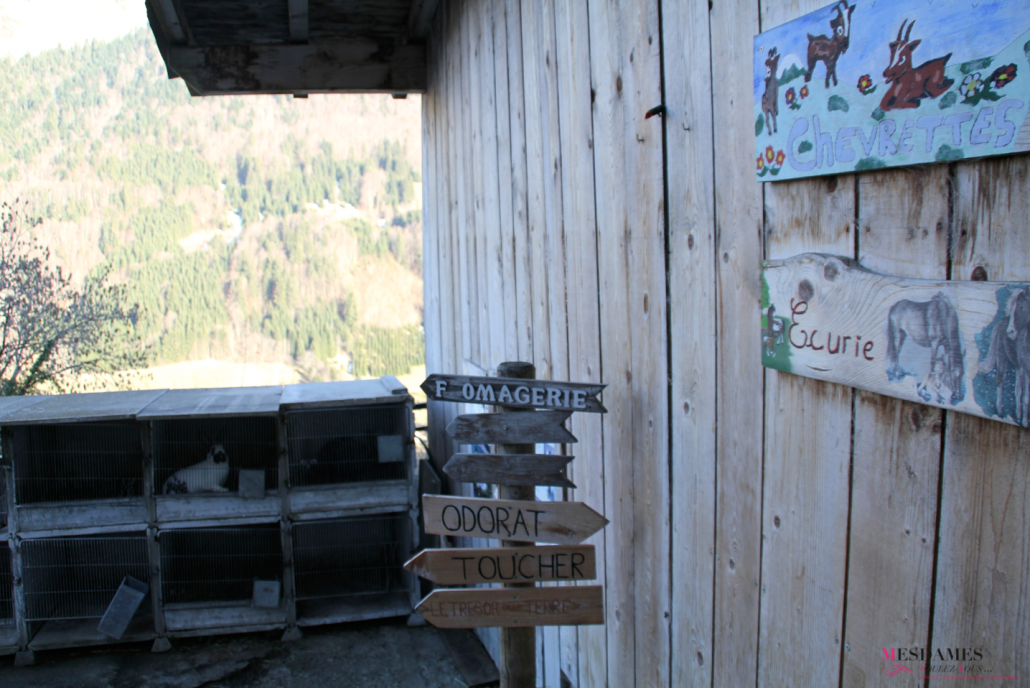 ferme petit mont bellevaux 16